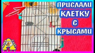ПРИСЛАЛИ КЛЕТКУ С КРЫСАМИ! / ЛАПКА ПОЛОМАЛАСЬ! / КОРМ ДЛЯ ХОМЯКА / 2 часть / Alisa Easy Pets