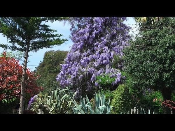 Природа Сочи Весна апрель в Сочи Потрясающе красивая природа Зимний театр Климат субтропики Сочи