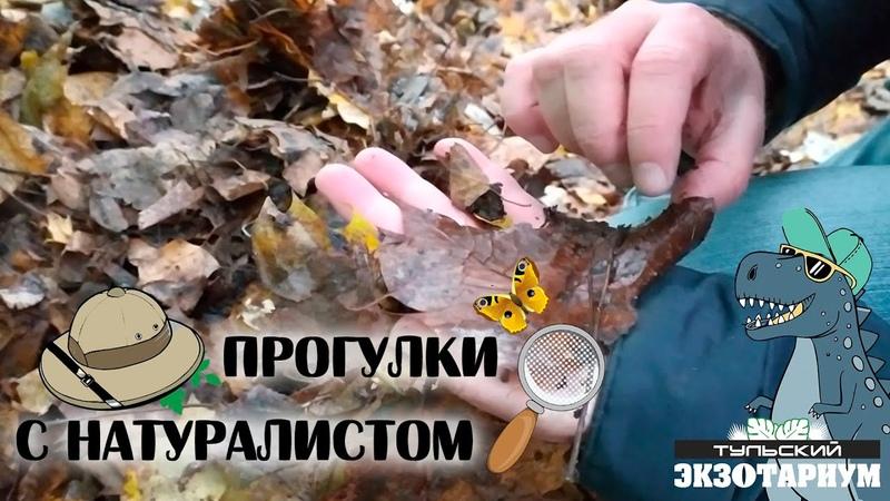 НА УЛИЦЕ СНЕГ А МУХИ НЕ СПЯТ Где и как зимуют насекомые