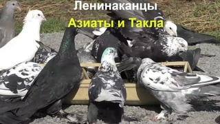 20.03.20., . Pigeons Asians, Leninakans and Takla