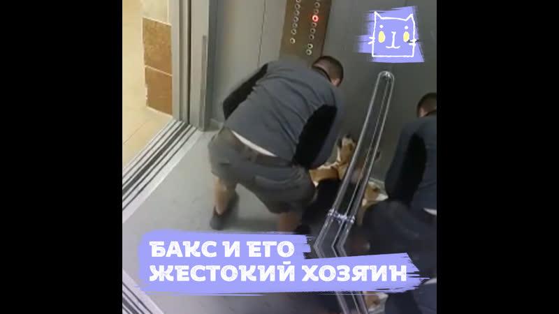 Хозяин избивает своего бигля Бакса