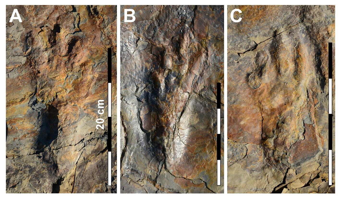 Так выглядят следы, оставленные древним родственником крокодилов