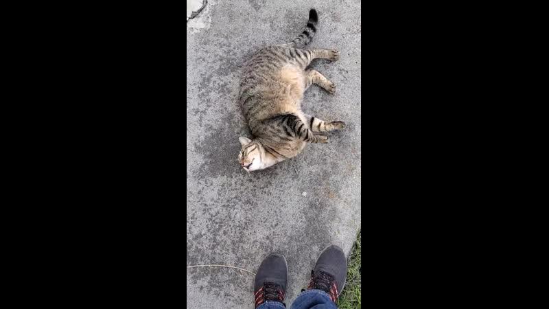 Neighborhood chonker coming to say hi