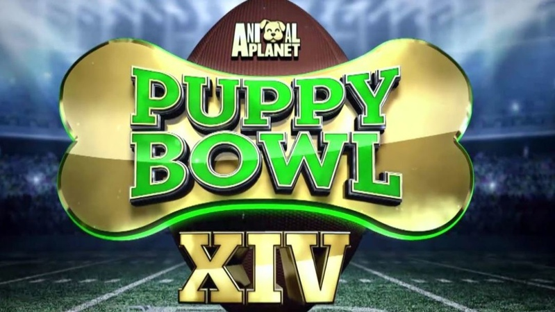 Harry Connick Jr on Instagram MONDAY 8 20 Cute PuppyBowlPups ref Dan Schachner are here PLUS BizarreFoods host Andrew Zimmern AND 10 year