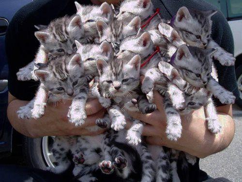 букет из котят