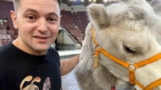 Дан Запашный рассказывает про дрессуру животных   Неуклюжий верблюд Сахарок