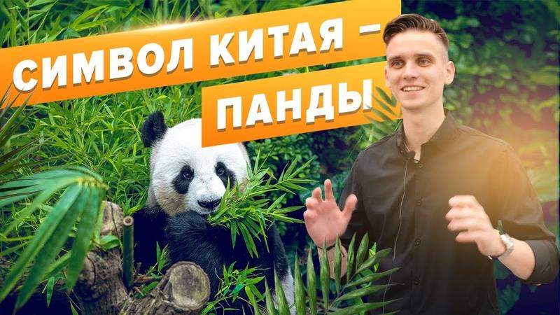 Китай до коронавируса Панды в городе Чэнду