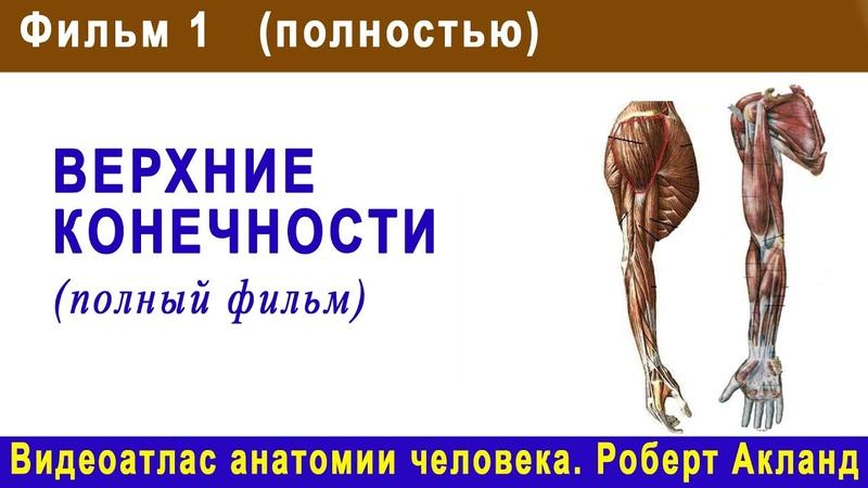 1. Верхние конечности (полный фильм) | Атлас анатомии Акланда